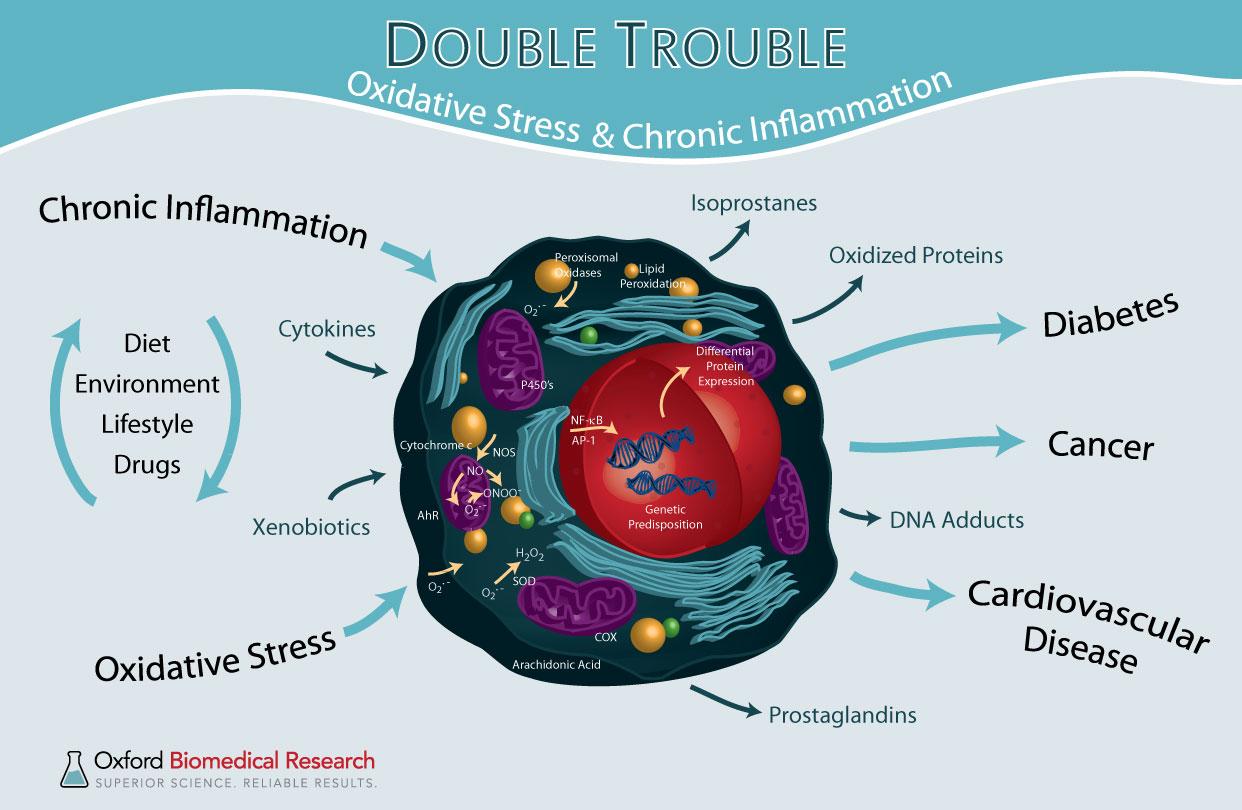 oxidative stress and antioxidants pdf