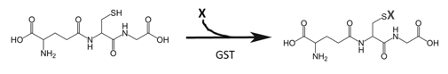 GST General Reaction