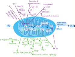 Oxidative Pathways